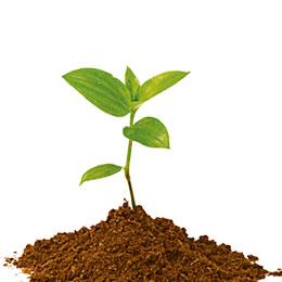 Plant & Soil